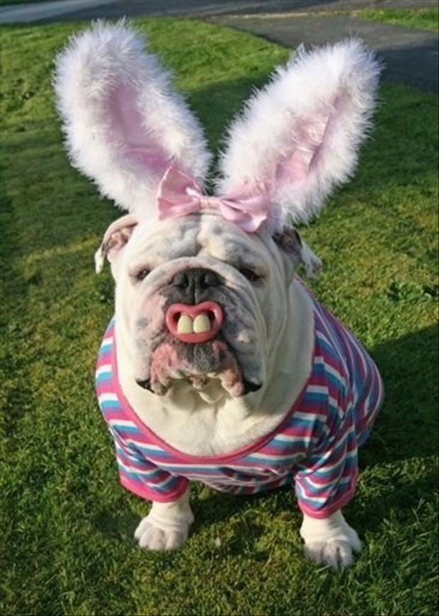 Happy Easter Dog Happy Easter Funny Dog